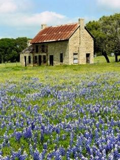 Old House & Field Of Flowers