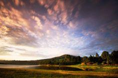 EstiloDF » Déjate encantar por la belleza de un ¡bosque que destella!