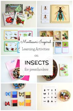 Insect activities for 3 years old