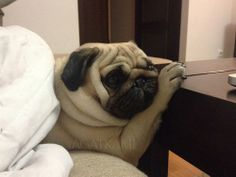 bobdoom:  *Heavy pug-sigh*