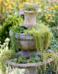 Love this vignette of plants spilling from urn and pot atop a birdbath. Virginia Farm Garden
