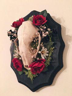 Raccoon Skull Mount: Red Roses