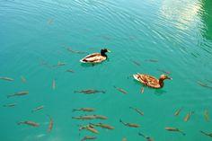 Wildlife in Plitvice Lakes, Croatia.