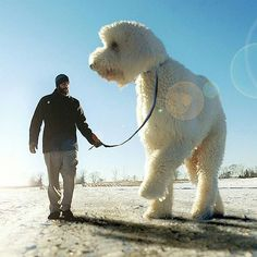 Check this out! Christopher Cline makes his dogs gigantic in these cool photos!
