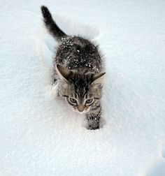 Awhh. I dont have a board for kitties so im putting this in the puppies board. Its so cute!