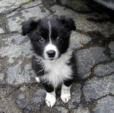 Dogs and Puppies - Read This Article To Get Answers To Your Questions About Dogs * More details can be found by clicking on the image. #DogsandPuppies