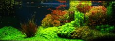 Google Image Result for http://www.aquascapingworld.com/gallery/images/1/1_Fluo01.jpg
