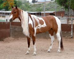 Beautiful colouring on this horse.