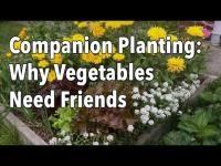 Embedded thumbnail for Best Flowers to Plant in Vegetable Garden