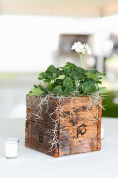 Simple and rustic boxed plants as centerpieces - lovely