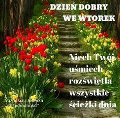 Good Morning, Herbs, Plants, Polish, Photo Illustration, Good Day, Buen Dia, Bonjour, Herb