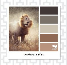 the Creature Color book   Design Seeds Volume VII
