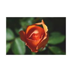 >>>Coupon Code          Orange Rose Blossom Gallery Wrapped Canvas           Orange Rose Blossom Gallery Wrapped Canvas lowest price for you. In addition you can compare price with another store and read helpful reviews. BuyDeals          Orange Rose Blossom Gallery Wrapped Canvas please fo...Cleck link More >>> http://www.zazzle.com/orange_rose_blossom_gallery_wrapped_canvas-192506126004068363?rf=238627982471231924&zbar=1&tc=terrest