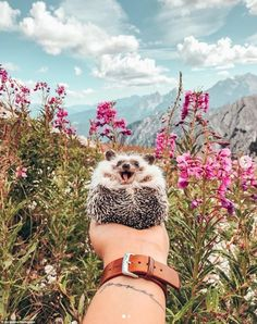 65 Pics Of Adorable Herbee The Hedgehog To Brighten Up Your Day Baby Animals Super Cute, Cute Little Animals, Cute Funny Animals, Cute Dogs, Cute Babies, Happy Hedgehog, Hedgehog Pet, Cute Hedgehog, Cute Animal Photos