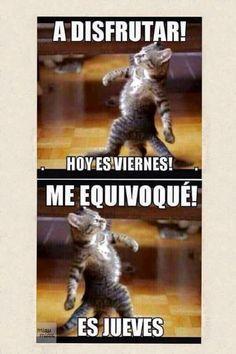 Funny Animal Memes, Cute Funny Animals, Funny Animal Pictures, Funny Images, Funny Cats, Funny Jokes, Memes Humor, Frases Humor, Cat Memes