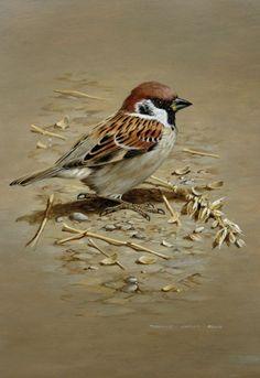 Terance James Bond, the Sparrow Indian Art Paintings, Animal Paintings, Bird Paintings, Realistic Paintings, Bird Drawings, Animal Drawings, Drawing Birds, Pretty Birds, Beautiful Birds