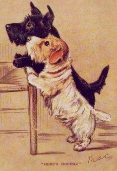 Scotty / Sealy - MATTED Dog Print - Lucy Dawson NEW