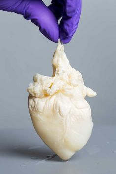 Dr. Doris Taylor, Director of Regenerative Medicine Research at Texas Heart Institute, holding a heart scaffold. When the cells are removed the heart is used as a framework to build new organs with stem cells. Houston Chronicle