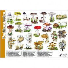 mushroom names guide