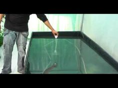 Hidroponía: Cultivo en Raiz Flotante Hydro Environment - YouTube