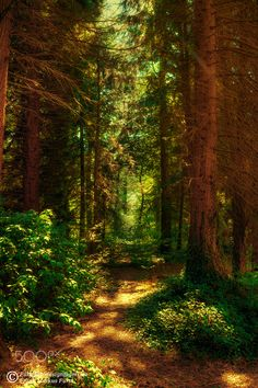Forest in the Sun... #tree landscape
