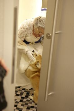 Queen Elizabeth II with her corgis :-)  (I'm glad I'm not the only one who gets jumped on when I'm dressed up.)