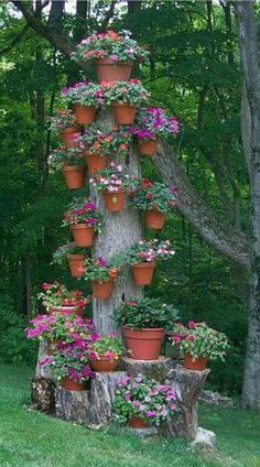 Flower pots on tree stump