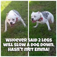"""PET-FRIENDLY HOME! I have 4 """"fur children.""""  I volunteer in animal rescue & used to foster special needs pups.  The pics here are of MY fur kids.  The 1st is Emma (pitbull/bulldog mix), who has 2 legs & is a hell raiser, lol. 2nd is Mikey (my baby), a Chow mix.  3rd is Jesse, Pit/Great Dane/Catahoula mix. Family website : Www.Facebook.com/EverythingEmmaDog  I never let the dogs wear my clothes (although Emma tries) so don't worry, lol!  If you see a stray hair, I apologize.  I try to make…"""