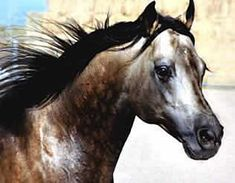 Hollywood Dunit Good, Sired By the great 5 Million Dollar Sire Hollywood Dun it, Standing at Ackerman Performance Horses