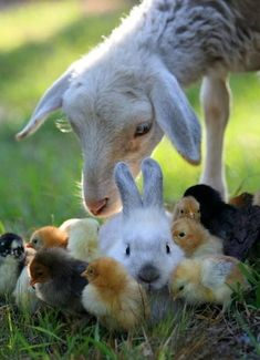A lamb, a bunny, & a bunch of chicks. This is it. This is really it. Literal cuteness overload. I just flatlined.