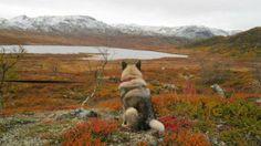 Hardangervidda. Norway. www.inatur.no/hytte/52f37d1be4b0ee6bd45a5234/urdevatn-pa-hardangervidda-ekte-hytteliv-pa-telemarks-tak  | Inatur.no