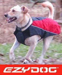 Talking Dogs at For Love of a Dog: Dog Gear - Holiday Gift Guide for Dogs and Dog Lovers