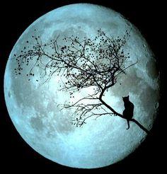 2 Luna llena. Muchas gracias por tu dedicación y por aguantar mis impertinencias. He aprendido bastante en este breve tiempo.