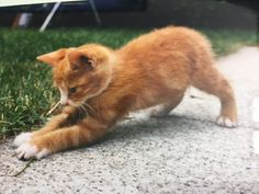 Kimi Baby – www.ch Kimi Baby – www. Cats, Animals, Cat Food, Dog Food, Farm Animals, Baby Meals, Food Recipes, Gatos, Animales
