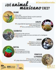 Infografías 2020 - Divulgación de la Ciencia, UNAM Classroom Language, Spanish Class, Foreign Language, Animals, Nightlife, Science, Riddles, Unity, Studio