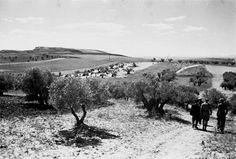 Soldados entre los olivos en el frente de Aragón en el año de 1938 (Archivo Histórico PCE)