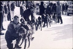 It's Huskies we think of when we think of sled dogs, but Irish Setters played a starring role in the sport as well. Sled Dogs, Poodle, Vintage Photos, Dog Breeds, Celtic, Irish, Abs, Puppies, Cute