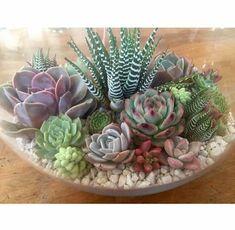 #succulent                                                                                                                                                                                 More