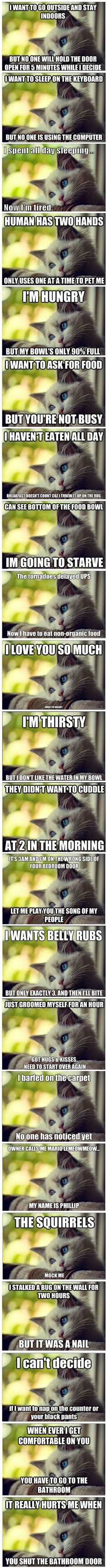 Best Of First-World Cat Problems ♥