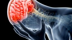 Scientists at St Louis University have discovered that the brain pathway A3AR could be the key to mitigating chronic pain without some of the unwanted baggage, potentially pointing to new methods of therapeutic treatment.
