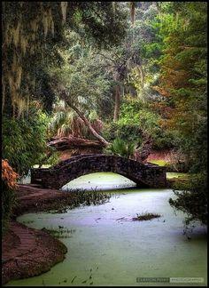 Jungle Gardens on Avery Island, Louisiana