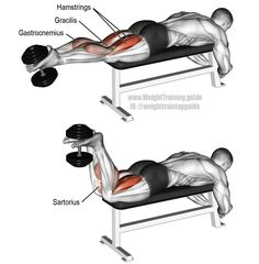 Dumbbell leg curl. An isolation exercise. Target muscles: Hamstrings (Rectus Femoris, Semitendinosus, Semimembranosus). Synergists: Sartorius, Gracilis, Gastrocnemius, and Popliteus (under Gastrocnemius). This exercise can be tricky. Visit site to learn tips and suggestions for proper form.