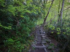 stair ideas for hill Above Ground Pool Decks, In Ground Pools, Spring Wildflowers, Sitting In A Tree, Lip Conditioner, Smoky Mountain National Park, Cades Cove, Great Smoky Mountains, Mountain View
