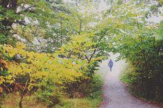 The walk to paradise garden