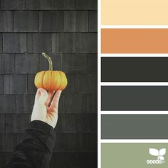 today's inspiration image for { halloween hues } is by @julie_audet ... thank you, Julie, for another wonderful #SeedsColor image share! #HappyHalloween