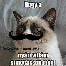 Grumpy Cat Humor, Cat Memes, Funny Memes, Jokes, Baywatch, Funny Photos, Funny Cats, Comedy, Lol