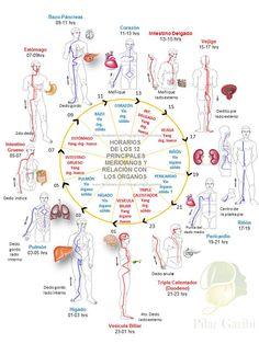 """MERIDIANOS DE ACUPUNTURA Y ACEITES ESENCIALES La medicina Tradicional China trata a la persona como un """"todo"""", tomando en cuenta los estados de energía emocional, mental y física.  También la MTC, ve al cuerpo como un microcosmos, o sea un reflejo del macrocosmos. La energía vital la llamamos Qi (chi), que está dividida en [...]"""