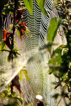 webs | Tumblr