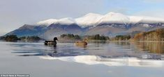 Ruffling feathers: These duck brave the icy weather to take a dip in Derwentwater, near Keswick in the Lake District in a beautiful winter scene Uk Landscapes, Beautiful Winter Scenes, Places In England, Uk Weather, Snow Scenes, Cumbria, Winter Landscape, Lake District, Christmas Pictures