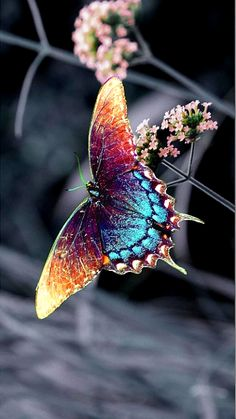 papillon is butterfly in French Beautiful Creatures, Animals Beautiful, Cute Animals, Colorful Animals, Colorful Birds, Butterfly Kisses, Butterfly Wings, Rainbow Butterfly, Butterfly Pupa